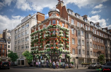 Hanging Basket Services for Pubs_image_001