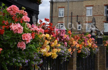 Hanging Basket Services for Pubs_image_002