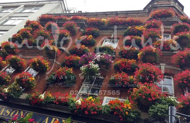 Hanging Basket Services for Pubs_image_005