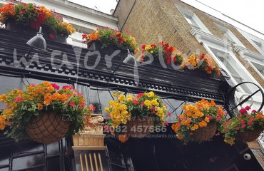 Hanging Basket Services for Pubs_image_008