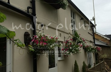 Hanging Basket Services for Pubs_image_009
