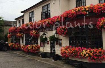 Hanging Basket Services for Pubs_image_010
