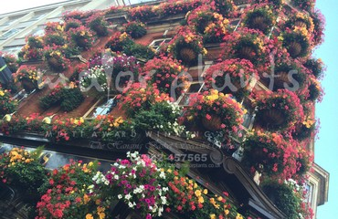Hanging Basket Services for Pubs_image_014