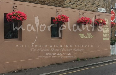 Hanging Basket Services for Pubs_image_024