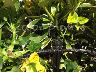 Irrigation Systems_image_009