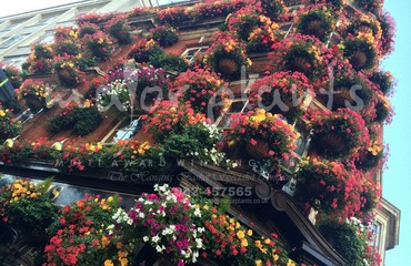 Window Boxes_image_006