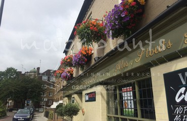 Window Boxes_image_011