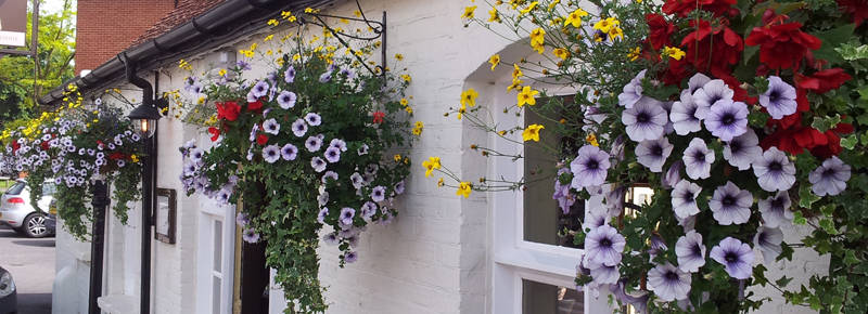 Hanging baskets for businesses in UK