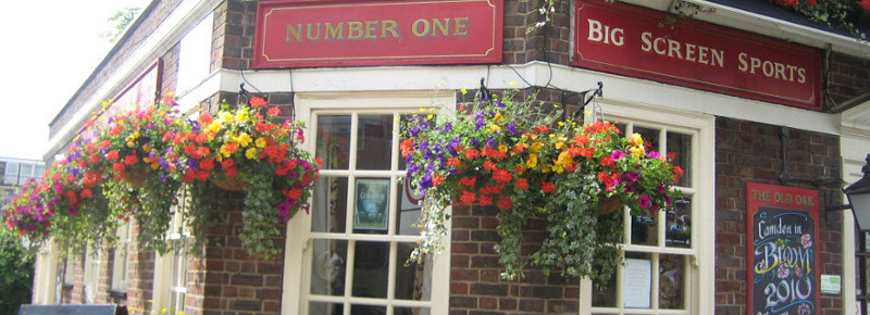 Indoor Plants , Outdoor Plants for pubs