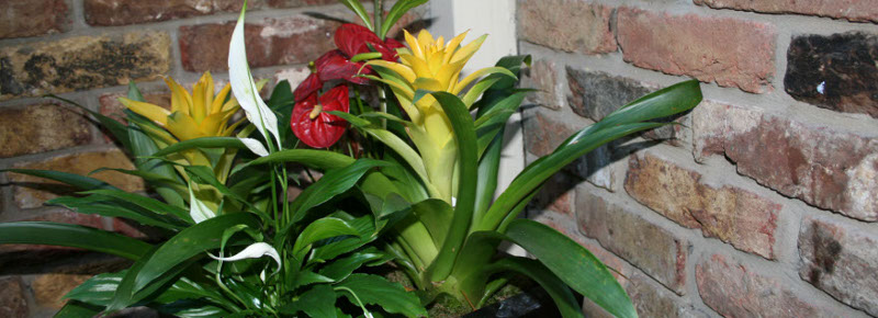 Indoor Plants , Outdoor Plants for hotels